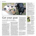 article about goats benefiting the landscape
