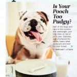 plump bulldog sitting at a table