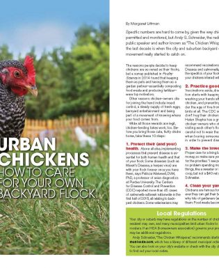 article on urban chickens